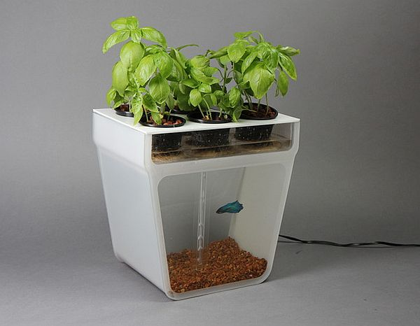 Home Aquaponics Kit_05