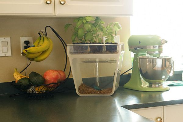 Home Aquaponics Kit_09