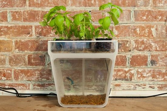 Home Aquaponics Kit_10