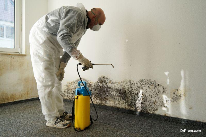 eliminate mold