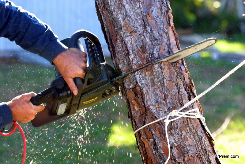 man removing tree