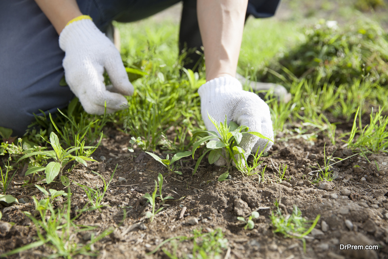 getting rid of weeds